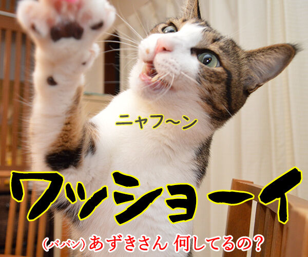 イッテQのお祭り男ってオモシロイわよねッ 猫の写真で4コマ漫画 1コマ目ッ