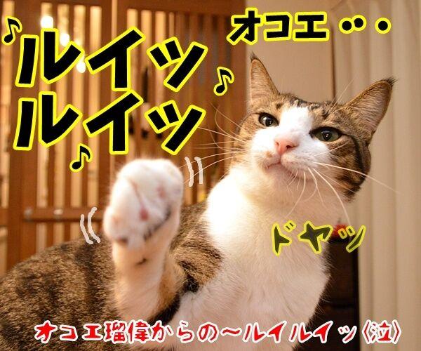 ボクもあの呪文を唱えちゃうよ? 猫の写真で4コマ漫画 4コマ目ッ