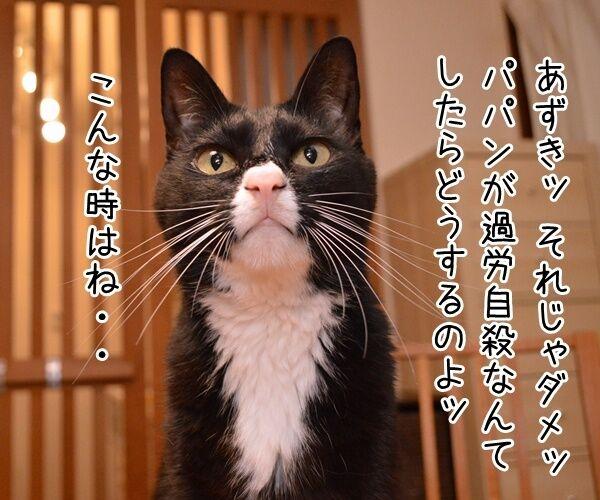 パパン、〇〇気でやりますッ 猫の写真で4コマ漫画 3コマ目ッ