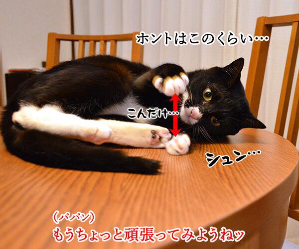 エビキャッチ 其の三 猫の写真で4コマ漫画 4コマ目ッ