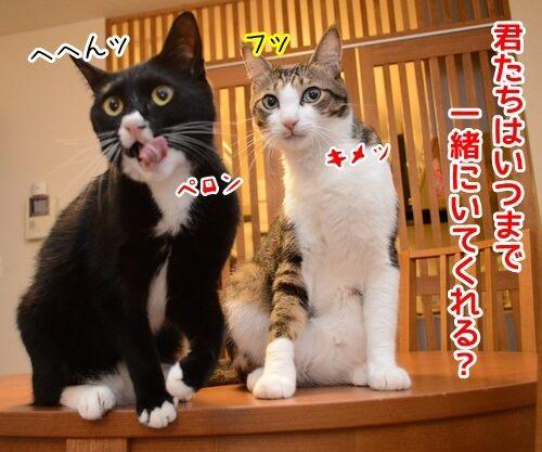 パパンのひとりごと 猫の写真で4コマ漫画 3コマ目ッ