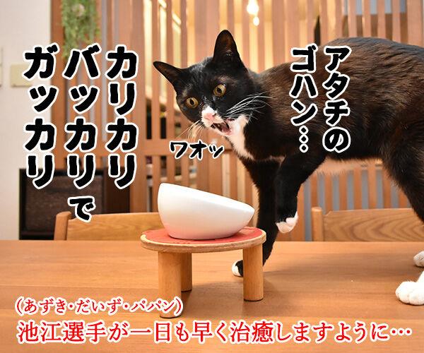 五輪相の『ガッカリ』発言に批判殺到なのッ 猫の写真で4コマ漫画 4コマ目ッ