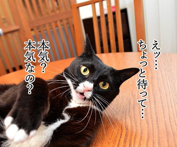 ちょっと待ってッ!! 猫の写真で4コマ漫画 1コマ目ッ