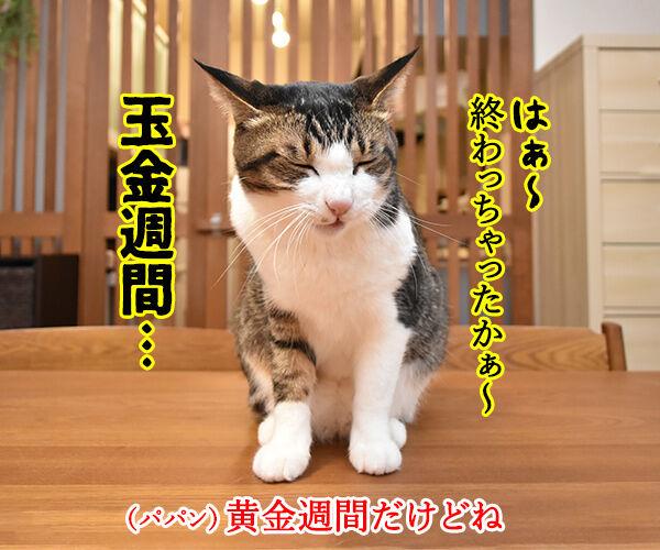 GWが終わっちゃったのよッ 猫の写真で4コマ漫画 2コマ目ッ