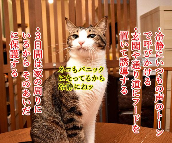 室内飼いの猫が脱走したらどうする? 猫の写真で4コマ漫画 2コマ目ッ