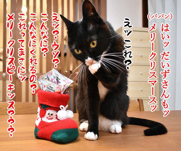 あずきさんとだいずさんにクリスマスプレゼントなのッ 猫の写真で4コマ漫画 3コマ目ッ