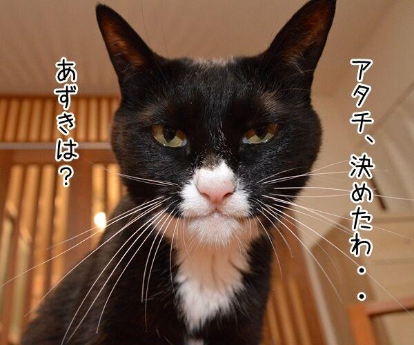 二人が決めたコト 猫の写真で4コマ漫画 1コマ目ッ
