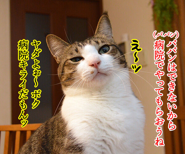 クサ汁 猫の写真で4コマ漫画 3コマ目ッ