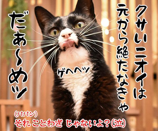 教えてッ だいず先生ッ 其の二 猫の写真で4コマ漫画 4コマ目ッ