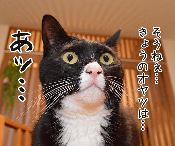 あッ… 猫の写真で4コマ漫画 2コマ目ッ