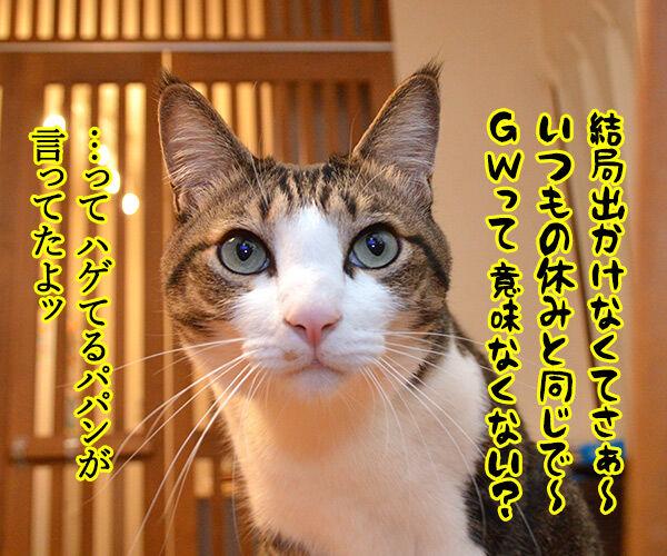 ゴールデンウイークに休んでもさぁ~ 猫の写真で4コマ漫画 3コマ目ッ