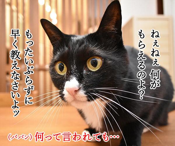 今日限定でステキなプレゼントがもらえる『○○○の日』 猫の写真で4コマ漫画 2コマ目ッ