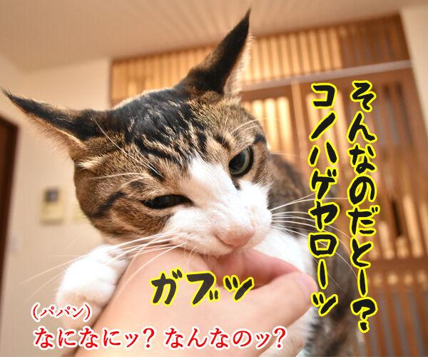 沢尻エリカがMDMA所持で逮捕されちゃったのよッ 猫の写真で4コマ漫画 3コマ目ッ