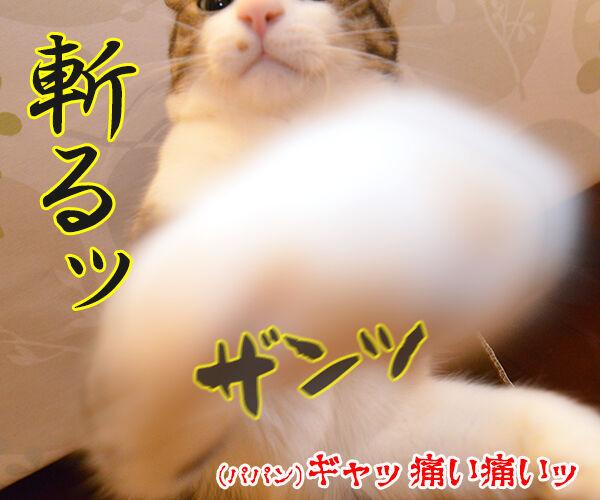 猫侍 其の一 猫の写真で4コマ漫画 3コマ目ッ