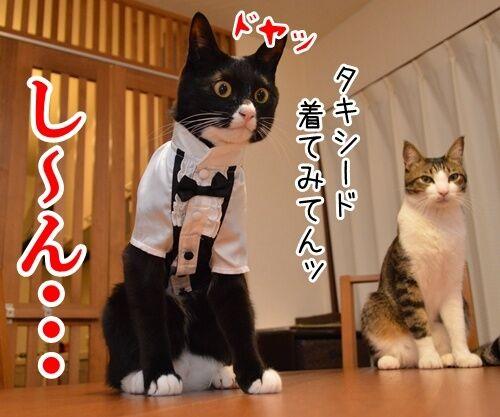 やねんけど 猫の写真で4コマ漫画 2コマ目ッ