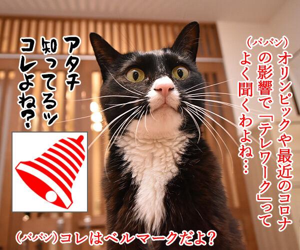 テレワークって最近よく聞くわよねッ 猫の写真で4コマ漫画 1コマ目ッ