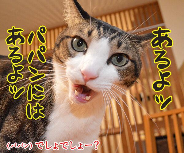 年末ジャンボは明日が抽選日なのッ 猫の写真で4コマ漫画 3コマ目ッ