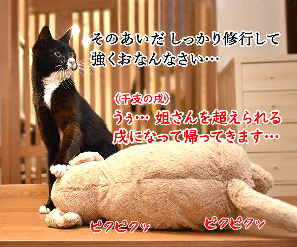 干支の戌も今日で終わりなのッ 猫の写真で4コマ漫画 3コマ目ッ