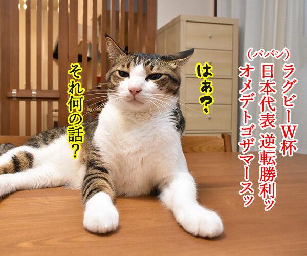 ラグビーワールドカップ日本代表がアイルランドに歴史的勝利なのッ 猫の写真で4コマ漫画 1コマ目ッ