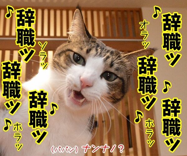 辞職ッ それッ 辞職ッ 猫の写真で4コマ漫画 2コマ目ッ