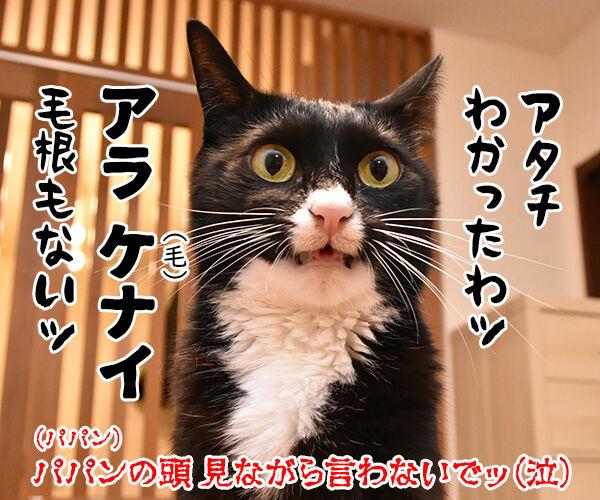 ドラゲナイ 猫の写真で4コマ漫画 4コマ目ッ
