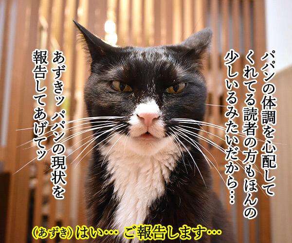 心配してくれている方へ 猫の写真で4コマ漫画 3コマ目ッ