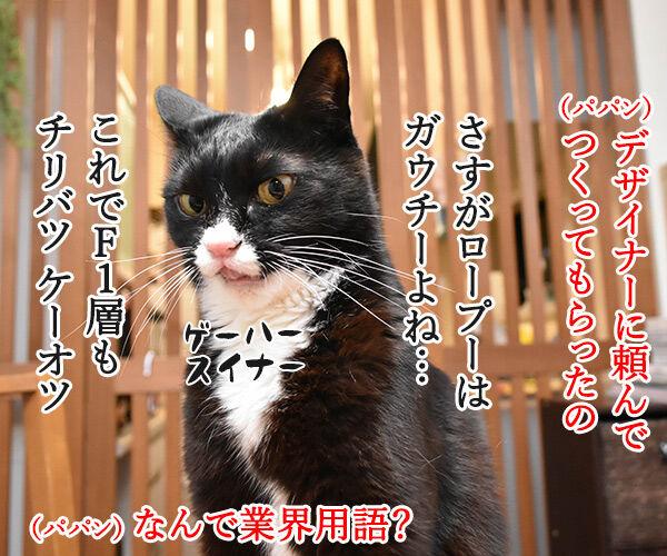 ブログのロゴを変えてみたのよッ 猫の写真で4コマ漫画 2コマ目ッ