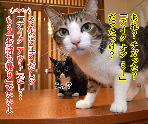 きょうは「ハンバーガーの日」だから 猫の写真で4コマ漫画 3コマ目ッ