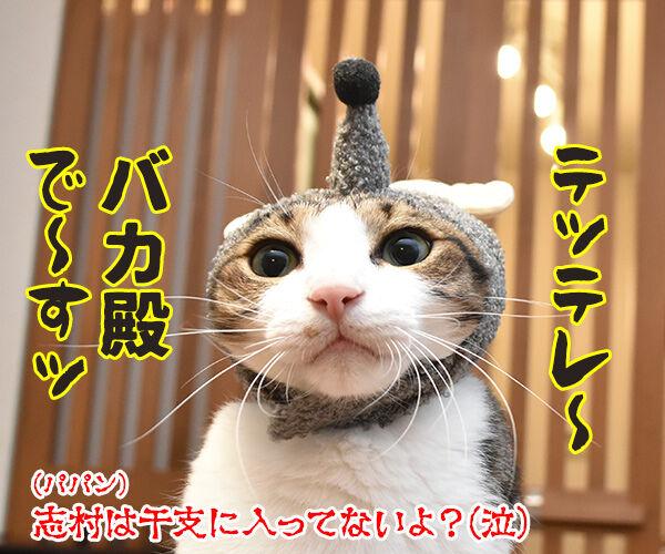 今年の干支を発表しますッ 猫の写真で4コマ漫画 3コマ目ッ