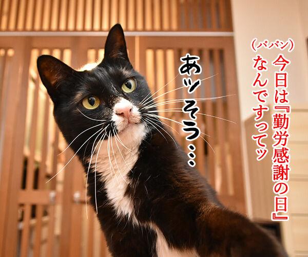 『勤労感謝の日』だから感謝してほしいのッ 猫の写真で4コマ漫画 1コマ目ッ