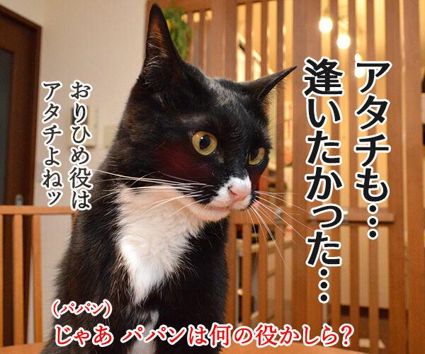 七夕 織姫と彦星が年に一度会える日 猫の写真で4コマ漫画 3コマ目ッ
