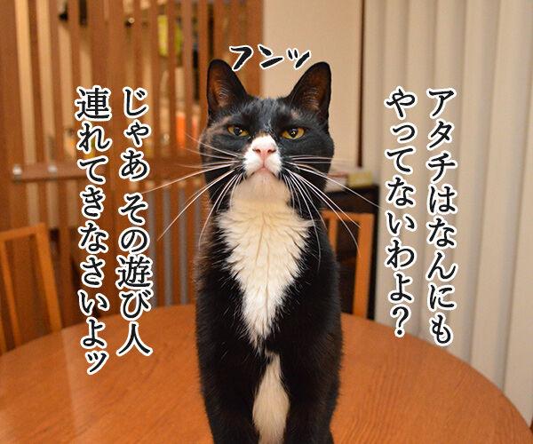 遠山のあずきさん 其の一 猫の写真で4コマ漫画 2コマ目ッ
