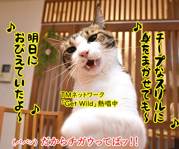 「GW」って何の略かしらッ? 猫の写真で4コマ漫画 3コマ目ッ