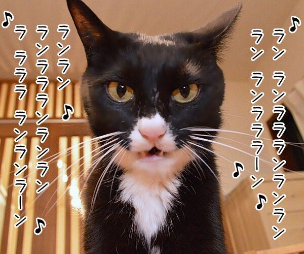 ナウシカ・レクイエム 猫の写真で4コマ漫画 1コマ目ッ