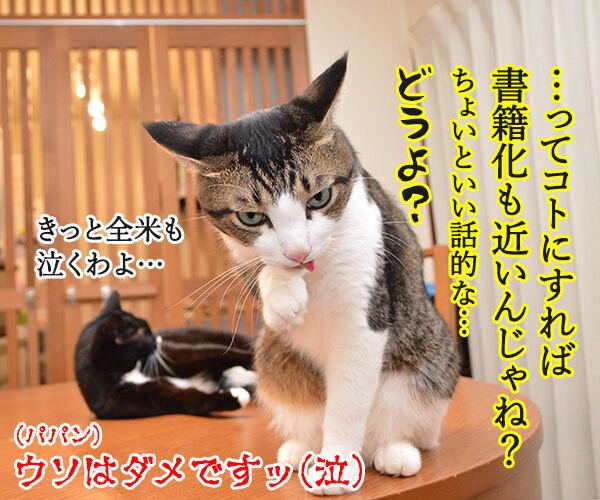 だいずさんとの出会い 猫の写真で4コマ漫画 4コマ目ッ