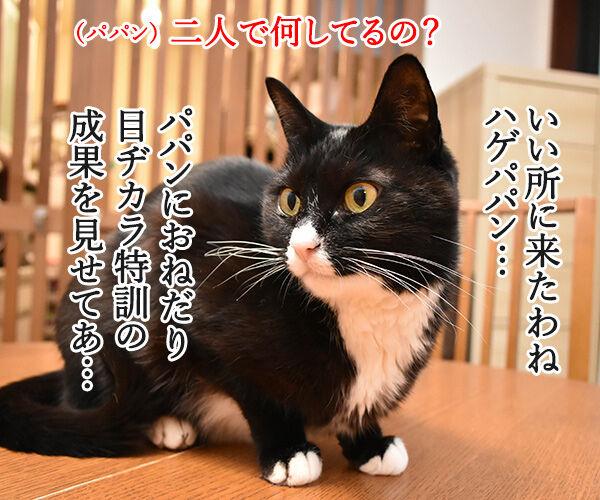 猫目ヂカラ王にッ おれはなるッ 猫の写真で4コマ漫画 3コマ目ッ