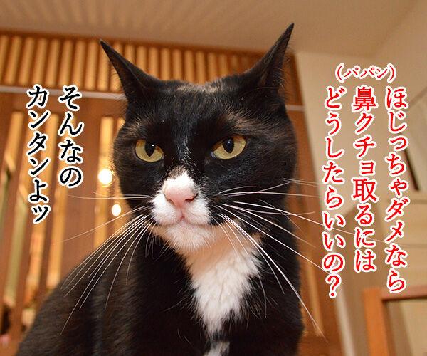 鼻をほじっちゃダメなのよッ 猫の写真で4コマ漫画 3コマ目ッ