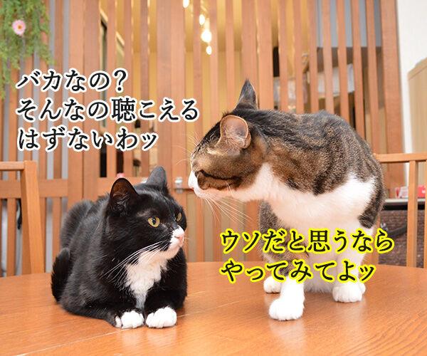 春一番が吹くと『春の足音』が聴こえるのッ 猫の写真で4コマ漫画 2コマ目ッ