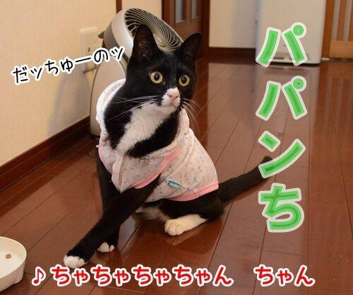 ひとりアド街コレクション 猫の写真で4コマ漫画 2コマ目ッ