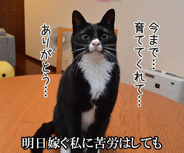 秋桜(コスモス) 猫の写真で4コマ漫画 2コマ目ッ