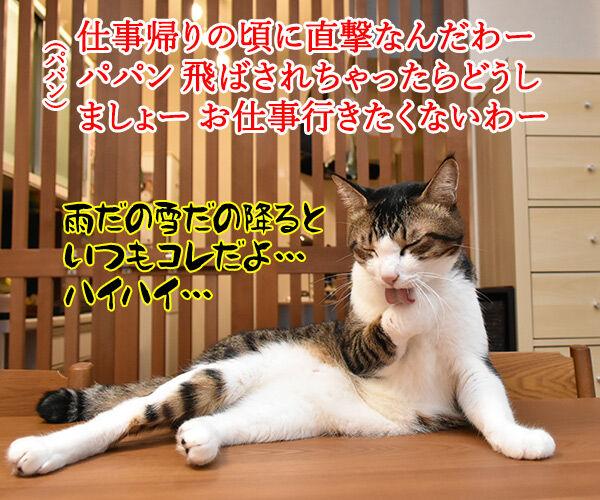 台風だから行きたくないわー 猫の写真で4コマ漫画 2コマ目ッ