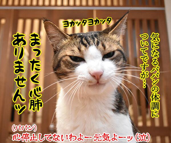 心配してくれている方へ 猫の写真で4コマ漫画 4コマ目ッ
