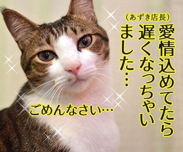 あずき食堂にて 猫の写真で4コマ漫画 2コマ目ッ