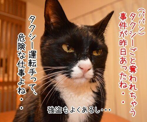 タクシー運転手のハナシ 猫の写真で4コマ漫画 1コマ目ッ