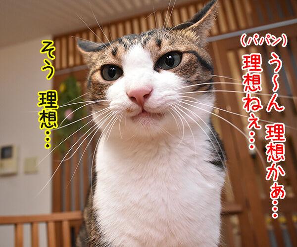 パパンの理想の猫って? 猫の写真で4コマ漫画 2コマ目ッ