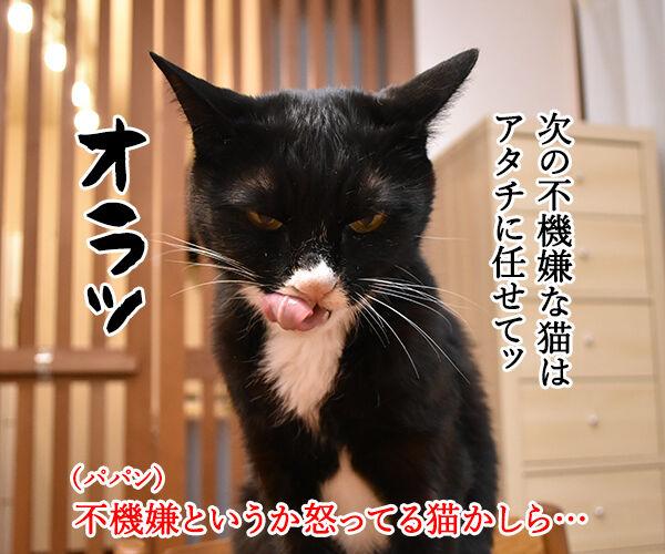 不機嫌な猫『グランピー・キャット』が亡くなったんですってッ 猫の写真で4コマ漫画 2コマ目ッ