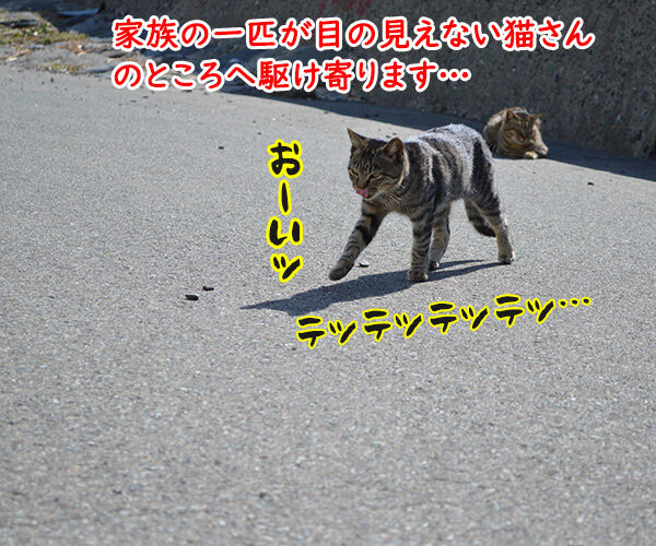 猫島 其の二 猫の写真で4コマ漫画 1コマ目ッ