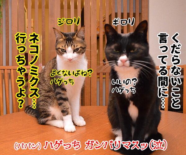 ネコノミクスの経済効果は2兆円超 猫の写真で4コマ漫画 4コマ目ッ