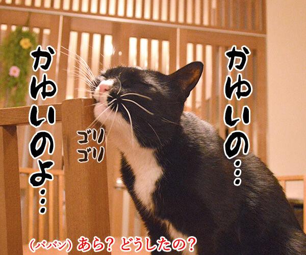 かゆいのよッ 猫の写真で4コマ漫画 2コマ目ッ