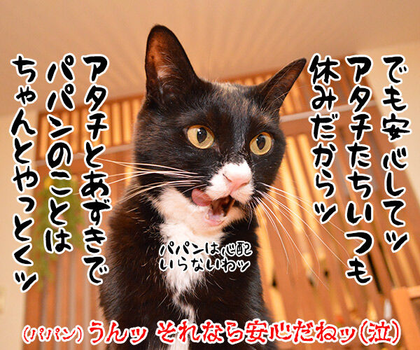 ユニ・チャームがペットとのお別れに特別休暇なんですってッ  猫の写真で4コマ漫画 4コマ目ッ